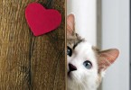 top-jobs-for-cat-lovers