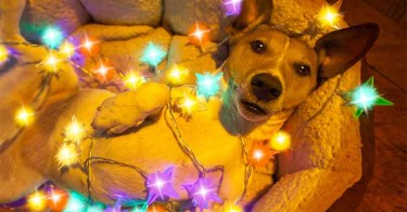 Christmas-Decoration-Fails